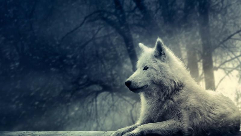 winter snow animals canine mammals white wolf wolves 1920x1080 wallpaper_www.wallpaperhi.com_4